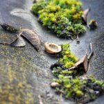 Moos in einer alten Eternit-Dachplatte mit einer Miniaturnussschale